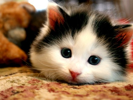 Pet Insurance Ontario | Welcome